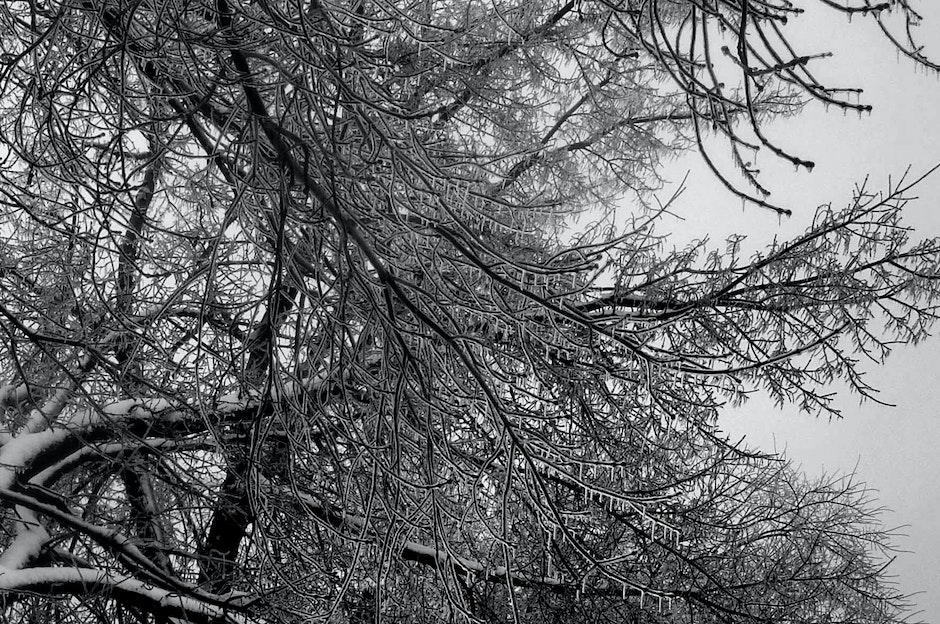 Icecles form on tree branches and twigs after a freezing rain