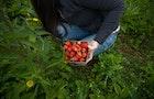 Strawberries and Raspberries
