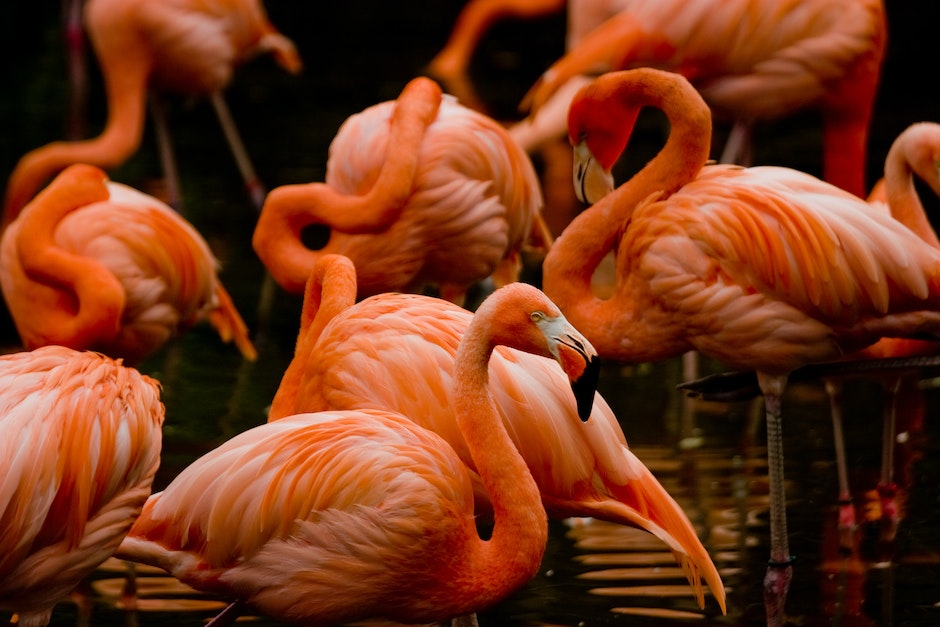 Flamingos near the Mayan Temple Ruin, in the Americas section